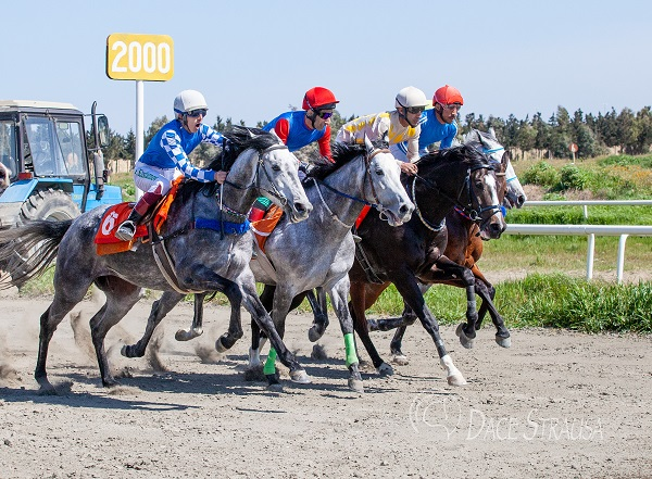 Equestrian Federation of Azerbaijan Republic will hold Racing